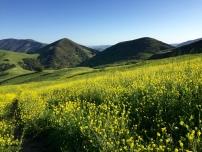 San Luis Obispo, CA