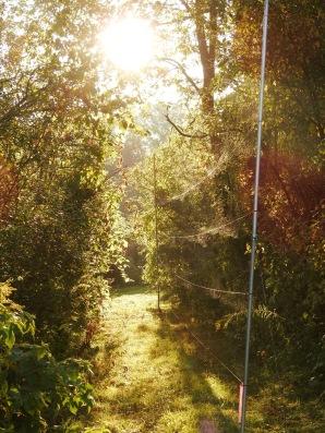 Mist-netting